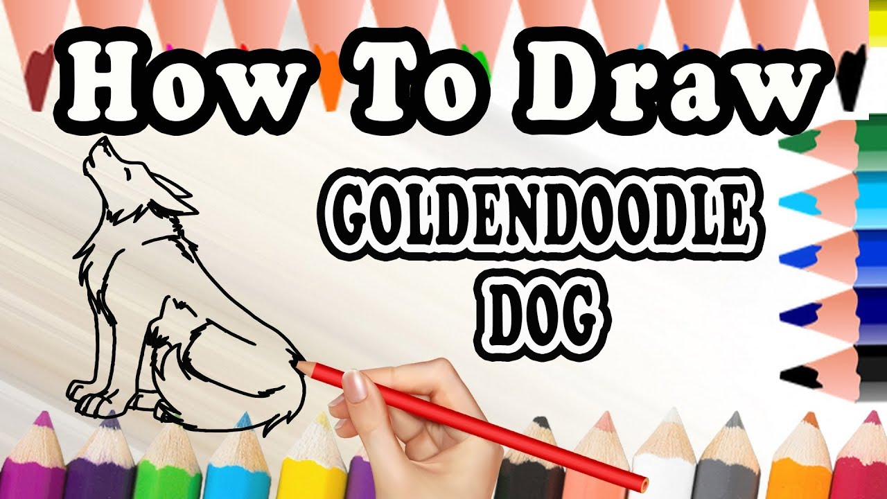 How To Draw A Goldendoodle Dog Draw Easy For Kids