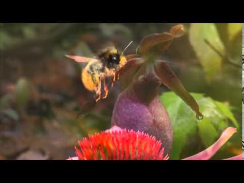The Secret Life of Orchids – Part II: Pollinators