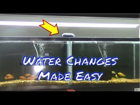 How to Connect Multiple Aquariums Together | Fun Fish Room Project