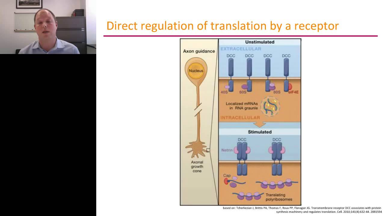 Ulrich Hengst - Axonal Protein Synthesis in ...