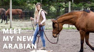 Meet my NEW HORSE! | I got an Arabian! | Barn Vlog