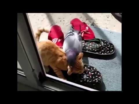 Lustiges video zum Totlachen
