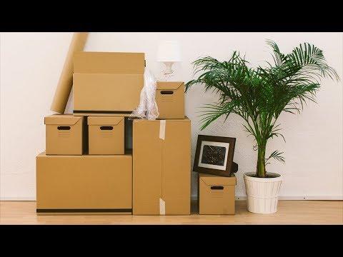 Растения ПЕРЕЕЗЖАЮТ. Как перевозить комнатные растения зимой.
