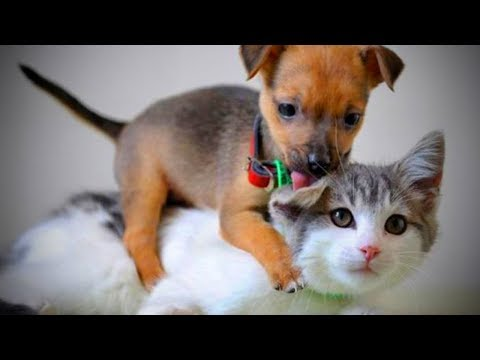Funny Pets 🐱🐶 Funny Cats And Dogs Playing (Full) [Funny Pets]