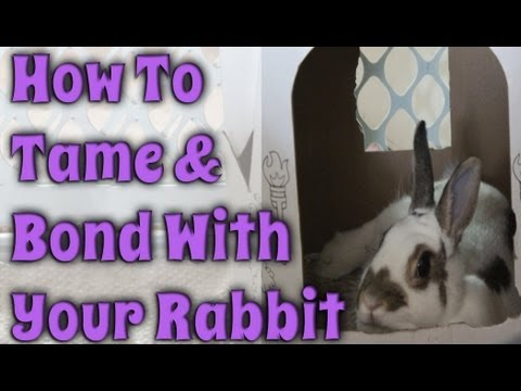 BudgetBunny: How To Tame & Bond With Your Rabbit