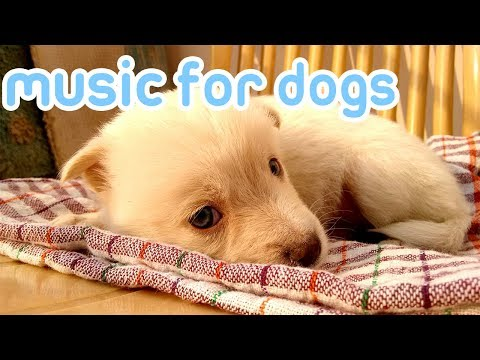 15 Hours of Anti Anxiety Music for Dogs! NEW 2019!