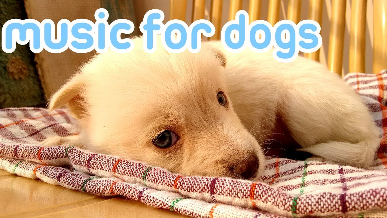 Download 15 Hours of Anti Anxiety Music for Dogs! NEW 2019!