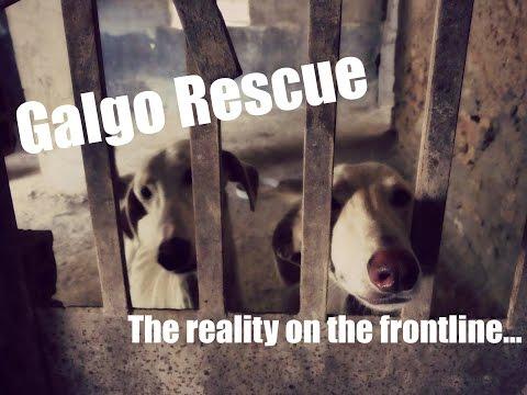 Emotional Mass Rescue As Galguero Gets Shut Down!