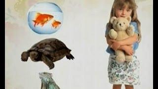 Аллергия на Домашних Животных - Ранок - Інтер
