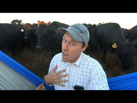 Cows Like You  (Girls Like You Parody)