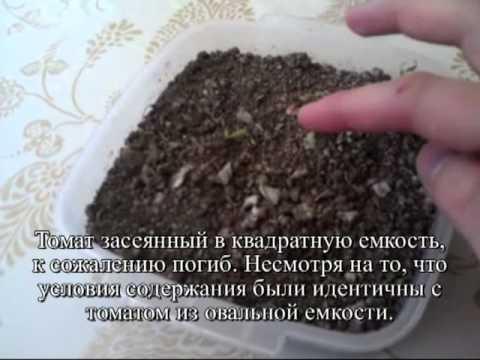 Киноа Черные семена - купить по лучшей цене в Москве от
