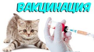 Вакцинация кошек, привики. Бешенство  [ProAnimals]