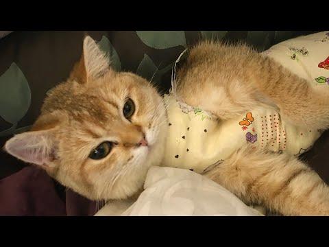 Вопрос: После стерилизации кошки, она начала линять , в чём причина?