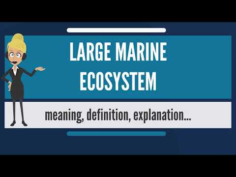 What is LARGE MARINE ECOSYSTEM? What does LARGE MARINE ECOSYSTEM mean?
