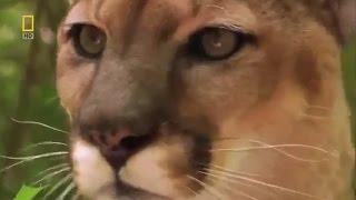 12 самых опасных животных в мире.  Северная Америка.  Документальный фильм National Geograpnhic