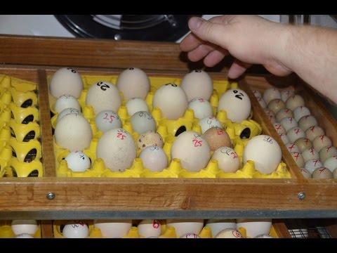 Вопрос: Яйца каких птиц ценятся наиболее дорого?