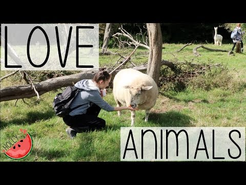 A WEEK IN THE LIFE OF AN ANIMAL LOVING VEGAN