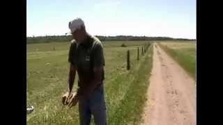 Clôtures électriques pour les vaches...
