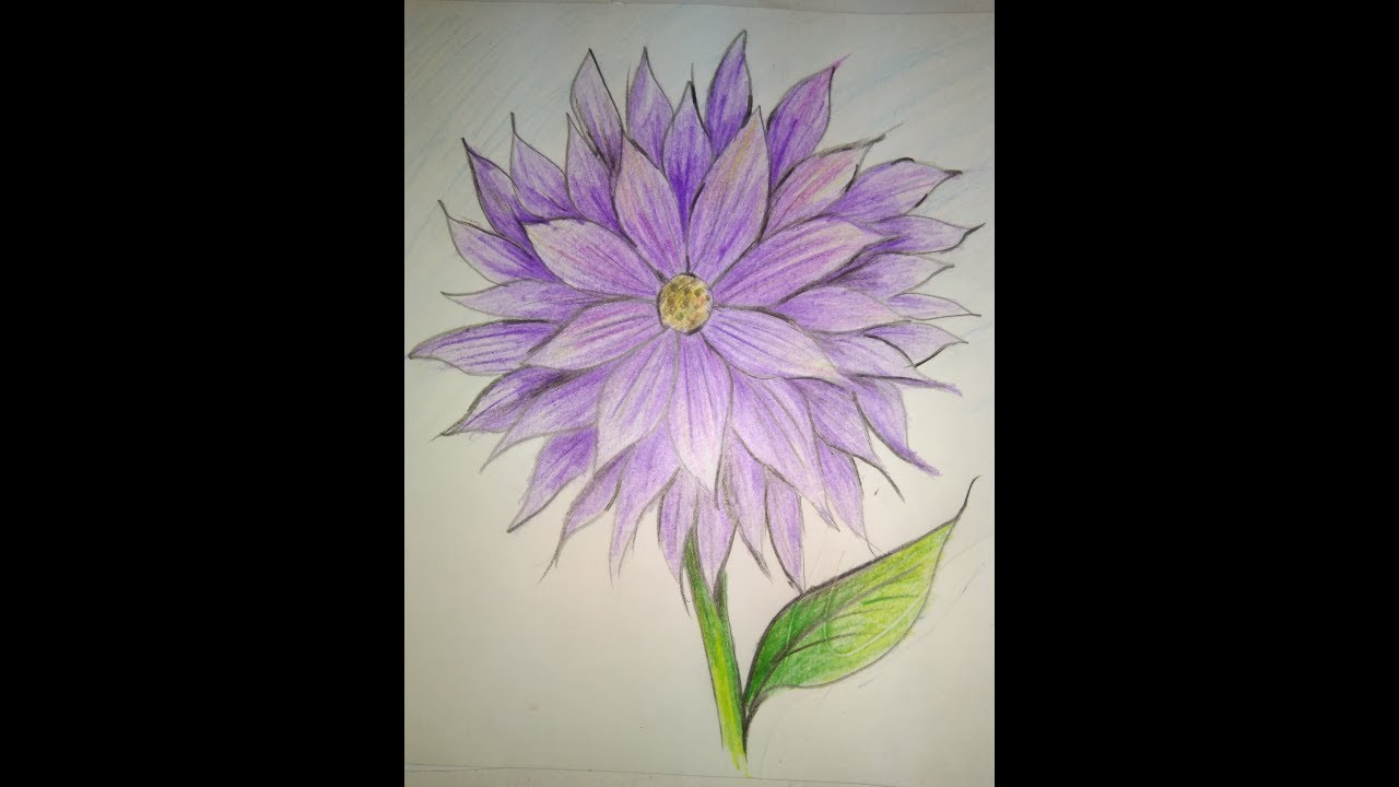 dahlia how to draw a dahlia flower step by step flower
