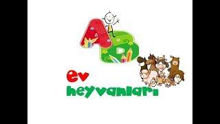 Ev heyvanları və onların səsləri. Звуки и голоса животных, Развивающее и Обучающее видео для детей