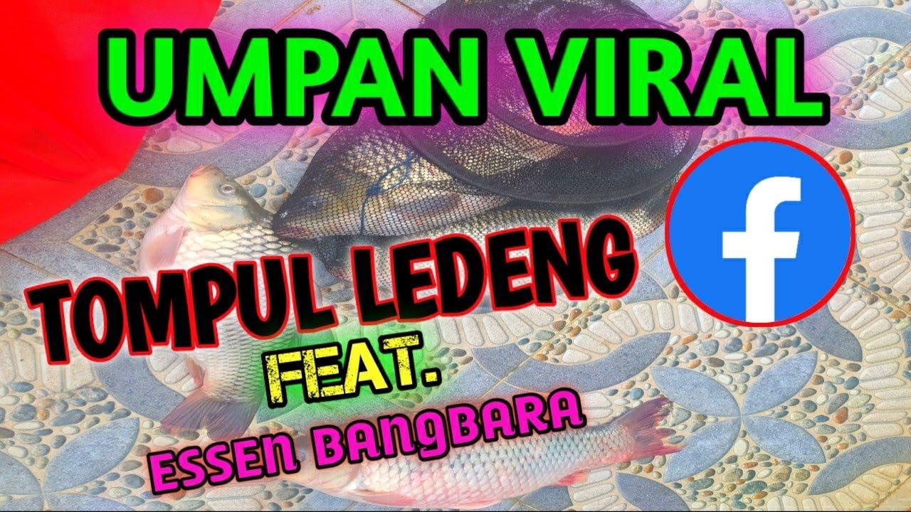 Download RACIKAN UMPAN VIRAL DI SOSMED KHUSUS IKAN MAS || TOMPUL LEDENG FEAT. ESSEN BANGBARA