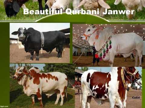 Dairy Farming aur Janwer Farba Dr Ashraf Sahibzada