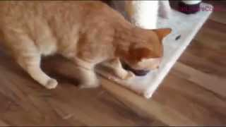 Lovely Cat When Retrieving Training | Do You Have Such Dog Cat?
