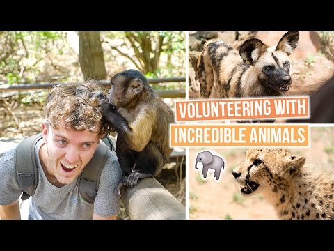 Volunteering with African Animals | South Africa Vlog