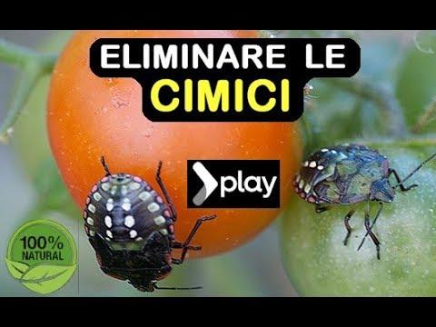 ELIMINARE LE CIMICI