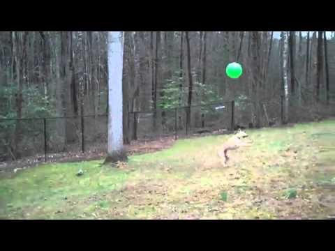 Dog With Impressive Keep-Up Skills