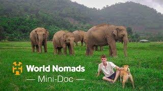 An Elephant Ambassador's Quest For Kindness – A Film by Ben Durham