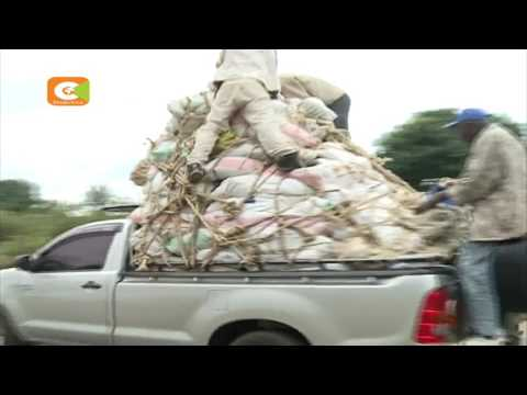 Many miraa traders turn to others business after UK ban