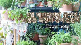 6월 베란다정원 꽃근황/ 식물들 개별 특징과 장마철 관…