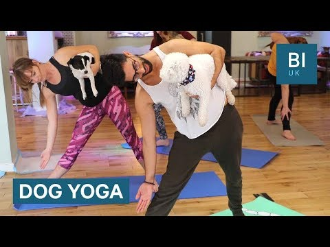 "Inside a ""Dog Yoga"" class"