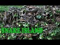 यहां चलती है साँपों की हुकूमत / Snake island brazil