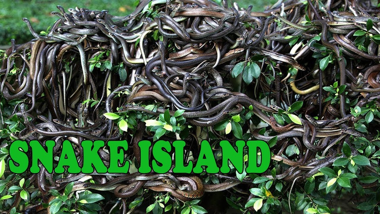Something Youtube snake island brazil pity