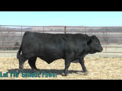 Lot 110 Genetic Power