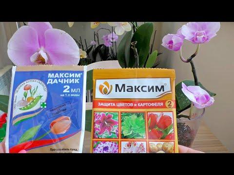 Орхидеи и ЧУДО препарат?! В ожидании БОЛЬШЕГО, чем РЕАЛЬНОГО! КЛАССИФИКАЦИЯ ОДНОЗНАЧНА!!!
