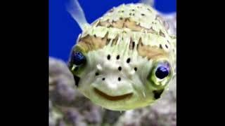 IL pesce spiritoso 1 (barzelletta)