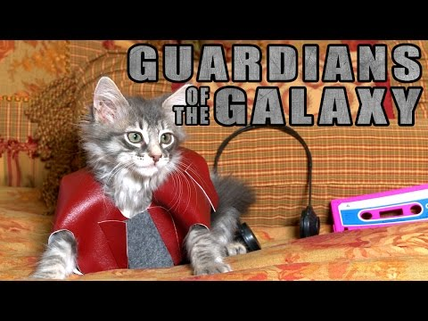 Guardians of the Galaxy (Cute Kitten Version)