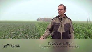 Agriculture innovante SCAEL : colza associé