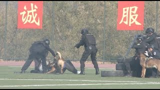 National Police Dogs Competition Held in Beijing