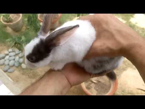 Hoe een konijn te kopen?