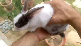 buying a bunny rabbit (tips) urdu // hindi