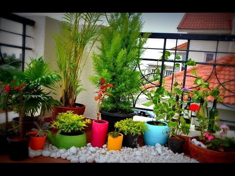 Balcony Gardens Prove No Space Is Too Small For Plants YouTube