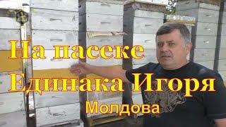 Пасека Единака Игоря (Молдова)