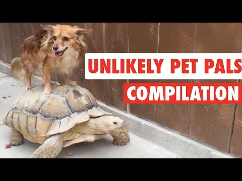 Unlikely Pet Pals || Funny Pet Compilation