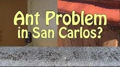 San Carlos Ant Control