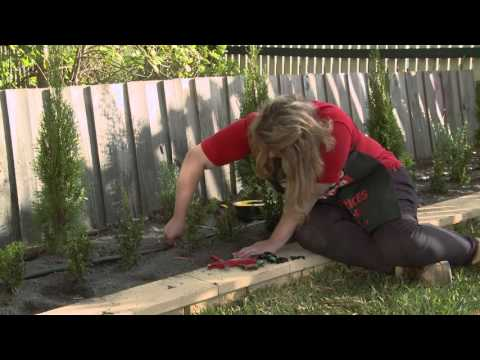 How To Install Irrigation Sprayers And Drippers - DIY At Bunnings