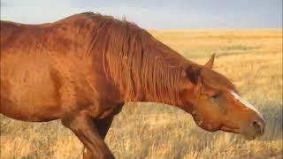 Одичавшие лошади Ростовского заповедника